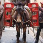 Coca Cola Donkey, Fez Medina, Morocoo