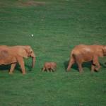 Elephant family in Parque de Caberceno, Spain