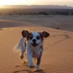 Charlie the desert dog