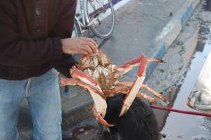 Massive crab, 25Dh. We didn't have a big enough pot though.