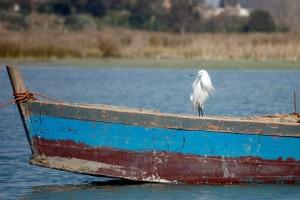Bird E: A little Egret