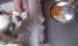 Chicken tikka masala for breakfast.