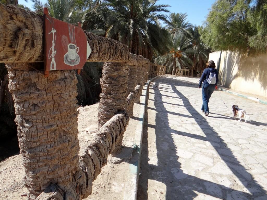 Cool palm tree fence.