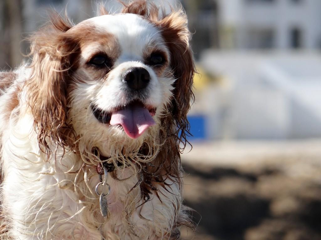 Charlie loves the beach