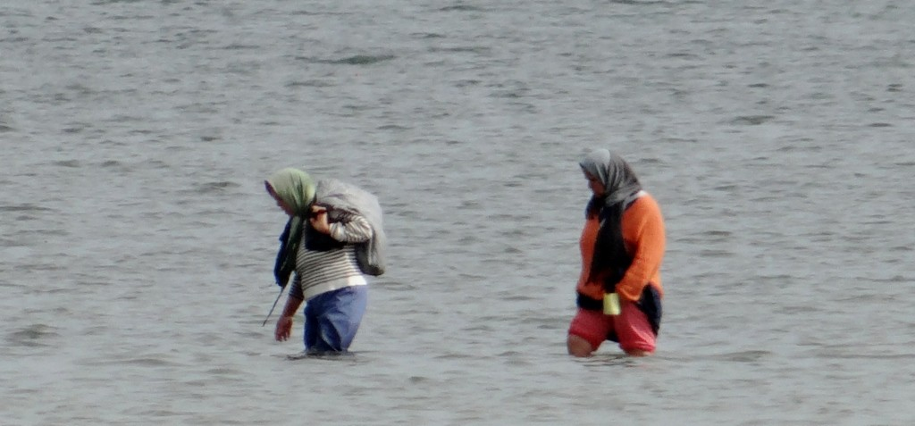 Women way out in the sea collecting food