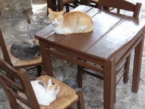 Greek felines awaiting taverna opening time.