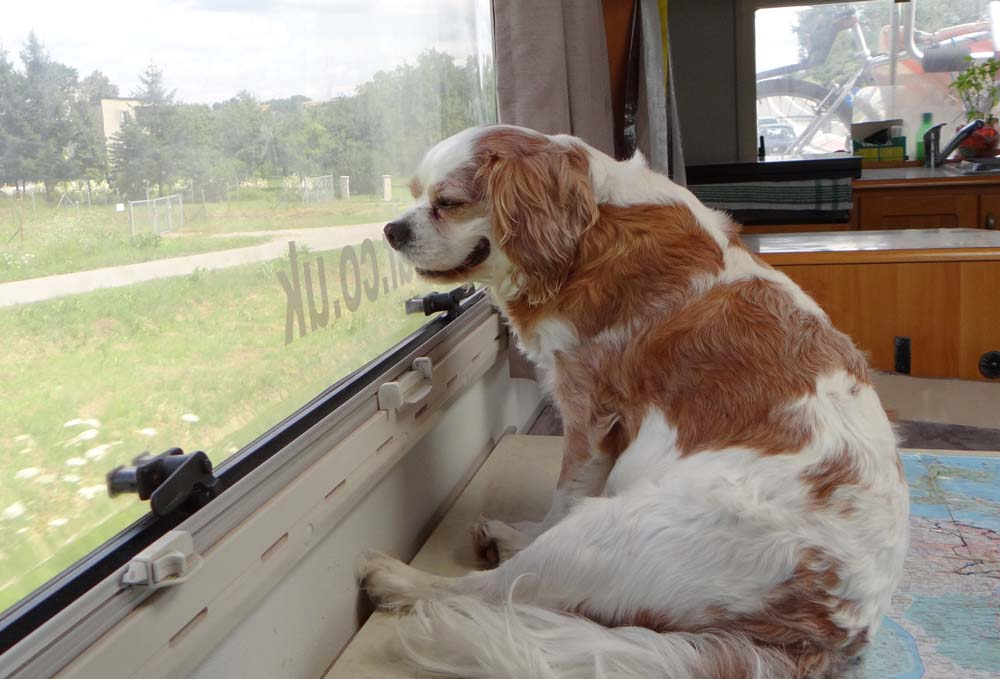 Even Charlie got bored looking out of the window