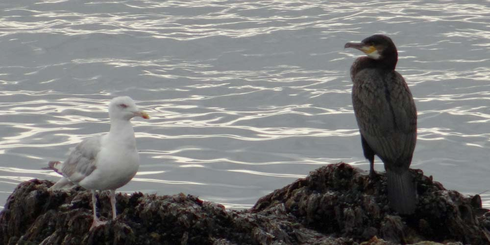 More birds on the beach...