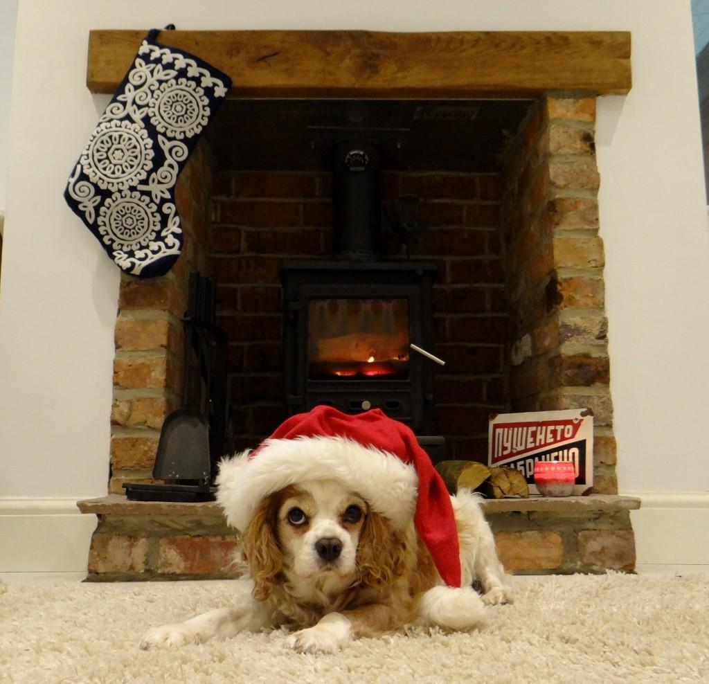 Christmas Charlie loving the wood-burner