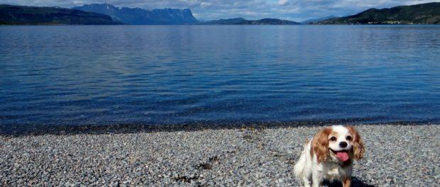Dog on beach Norway