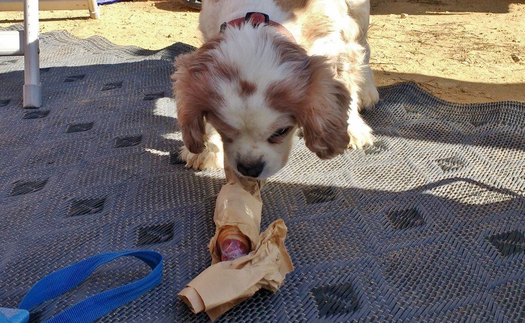 Dog Christmas Present