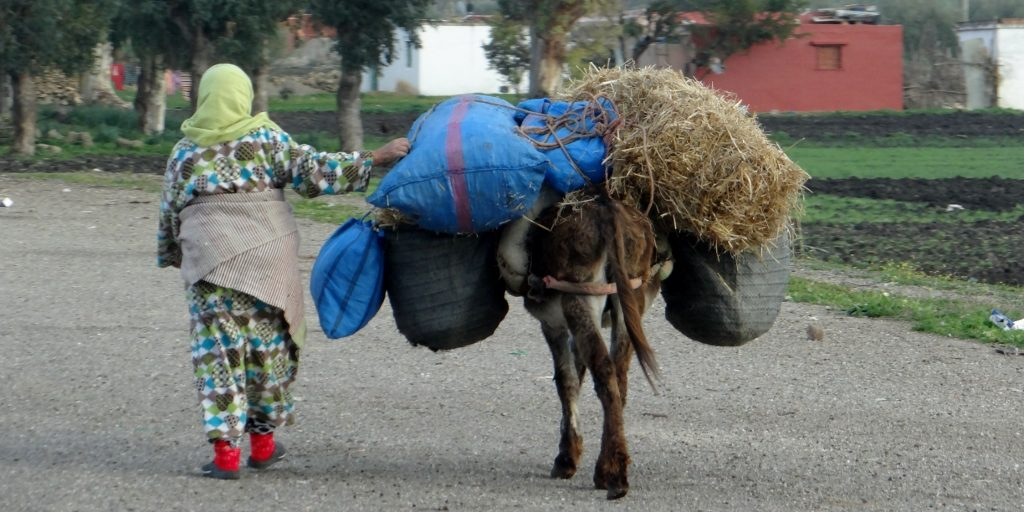 And this is Morocco, another side of it, poverty on a donkey